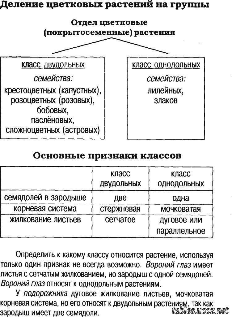 ботаника в таблицах схемах тестах и терминах бампера
