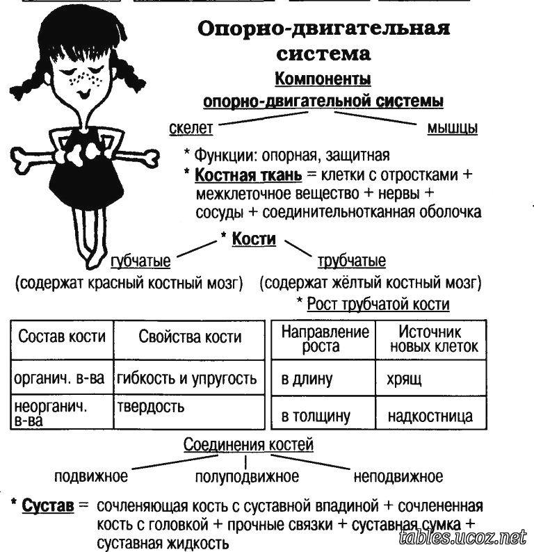 vidneyutsya-soski